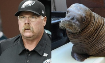 andy-reid-walrus